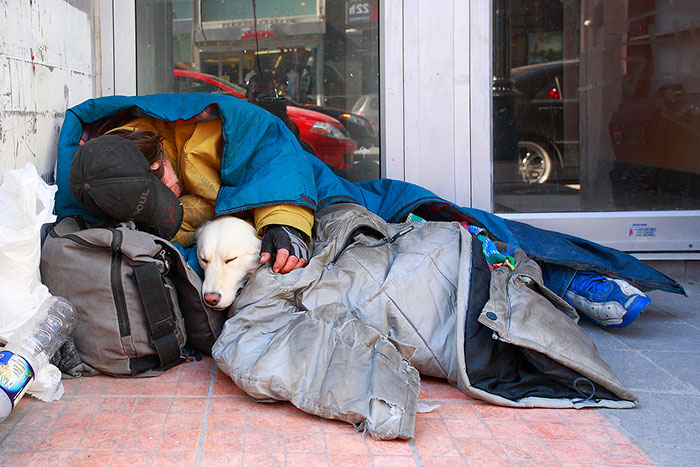 homeless-dogs-unconditional-love-best-friend-54__700