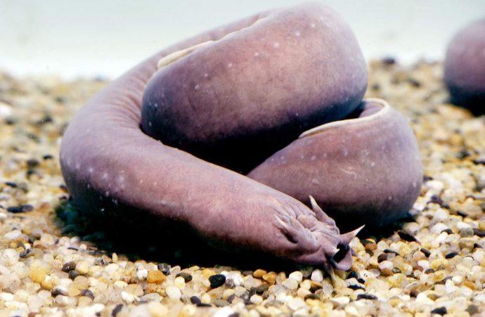morskie-chudisha