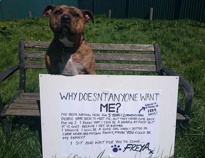 worlds-loneliest-dog