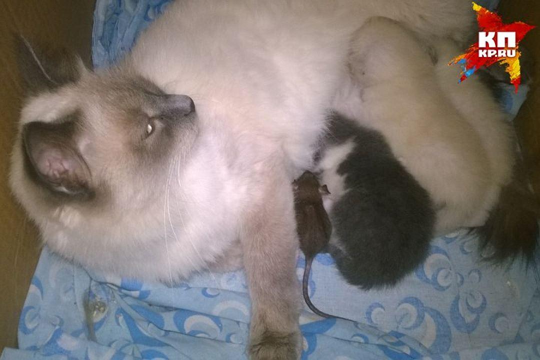 cat-mous2