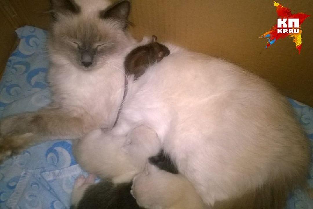 cat-mous5