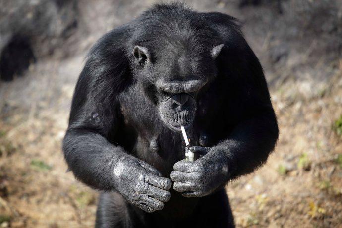 monkey рис 3