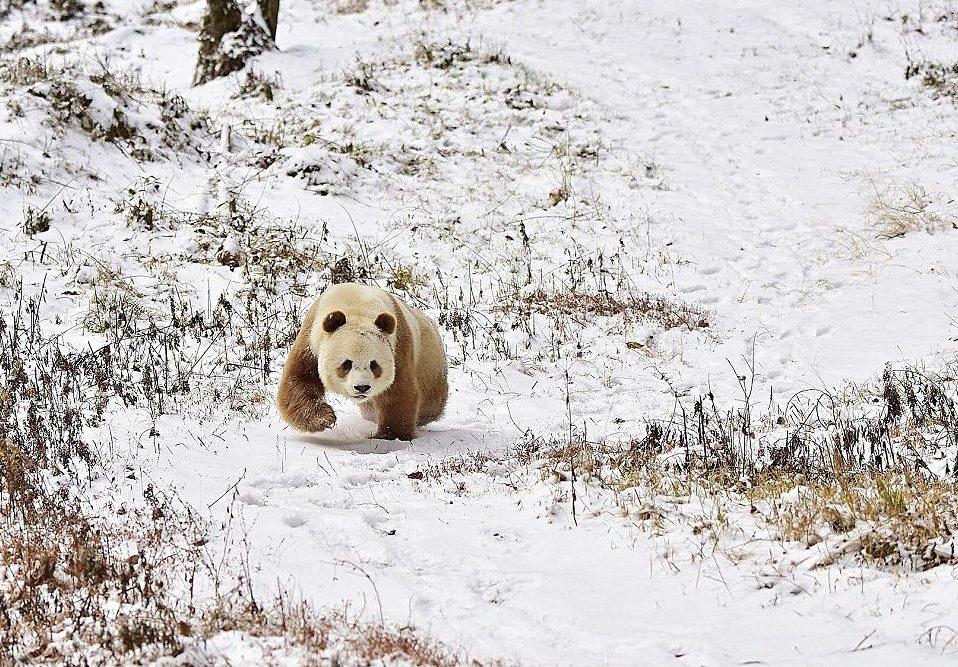 panda рис 2