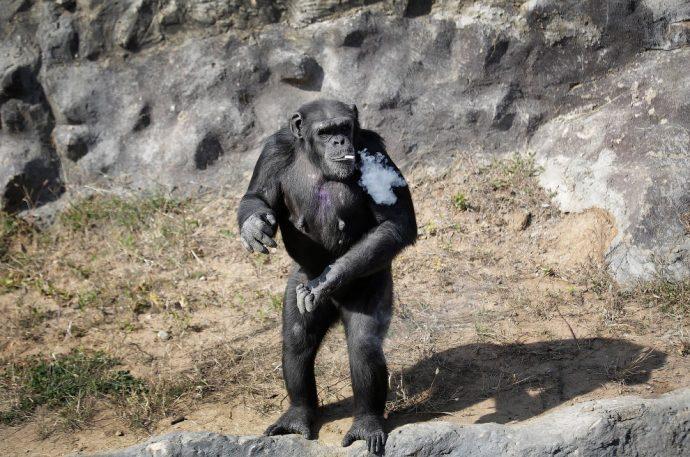 monkey рис 5
