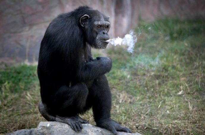 monkey рис 6