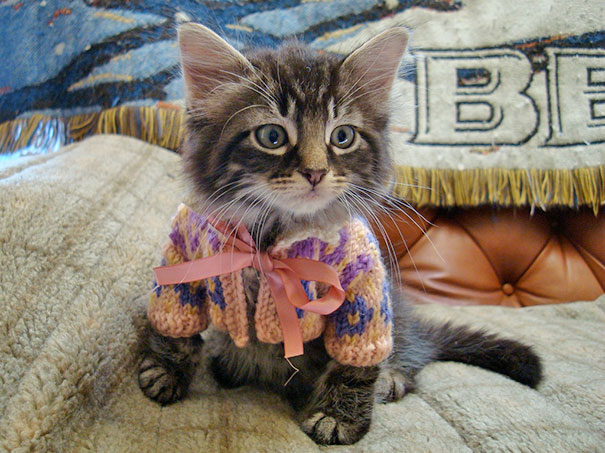 cute-animals-wearing-tiny-sweaters-1-57ff4f6925de7__605