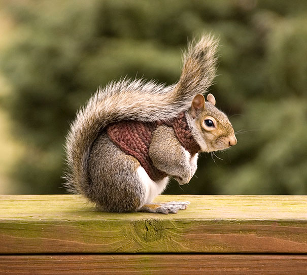 cute-animals-wearing-tiny-sweaters-11-57ff4f8caa879__605