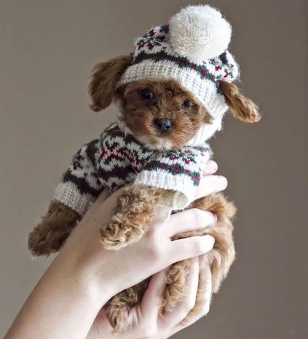 cute-animals-wearing-tiny-sweaters-54-5804980610b3e__605