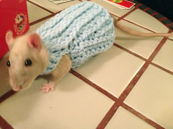 cute-animals-wearing-tiny-sweaters-76-5804c59cc5572__605