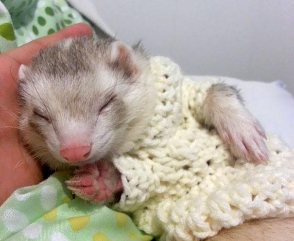 cute-animals-wearing-tiny-sweaters-87-5804de7ed3e9f__605