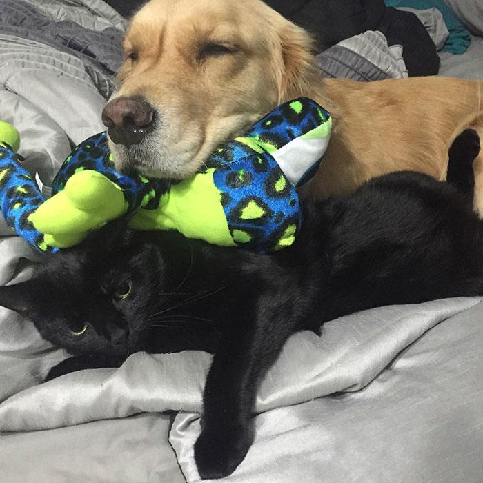 dog-brings-toys-mojito-1