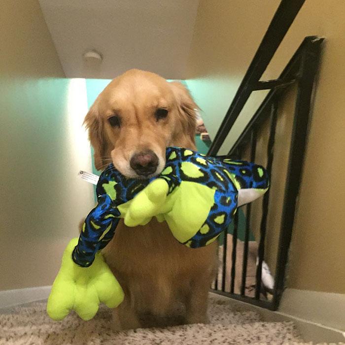 dog-brings-toys-mojito-13