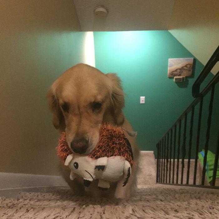 dog-brings-toys-mojito-15