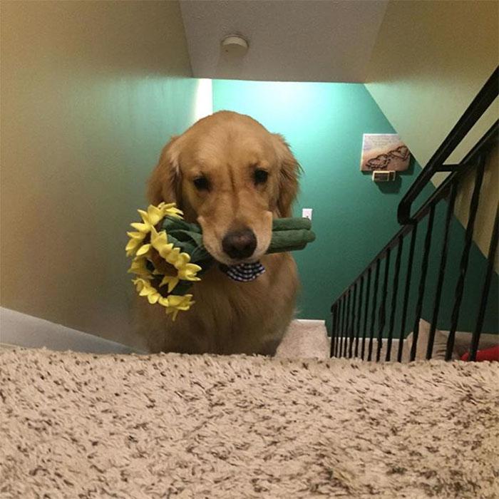 dog-brings-toys-mojito-21