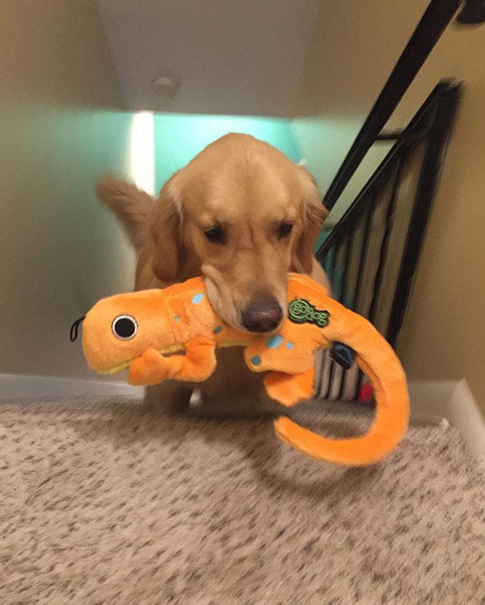dog-brings-toys-mojito-3