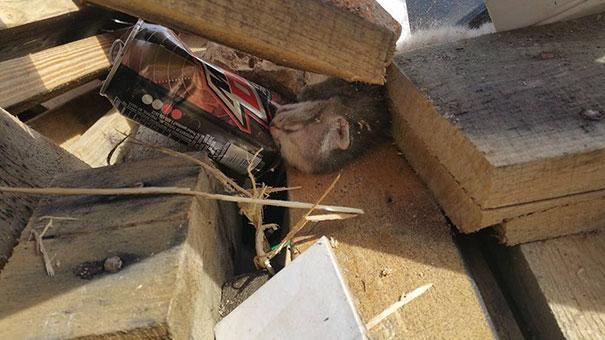 man-saves-kittens-wood-dumpster-1