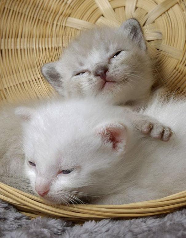 man-saves-kittens-wood-dumpster-14