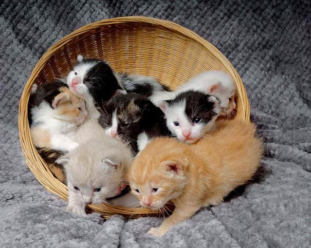 man-saves-kittens-wood-dumpster-15