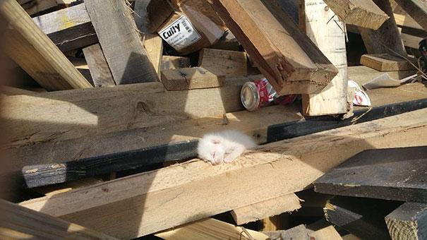 man-saves-kittens-wood-dumpster-4
