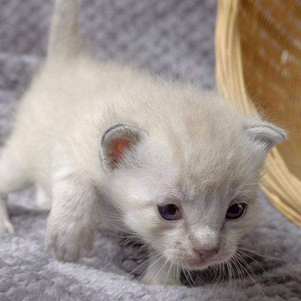 man-saves-kittens-wood-dumpster-5