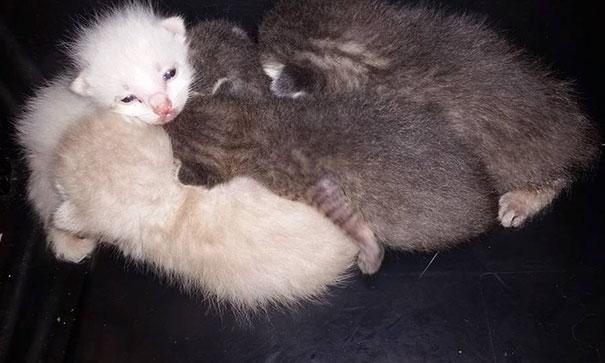 man-saves-kittens-wood-dumpster-8