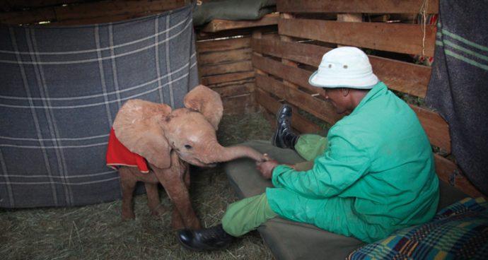 zdavid-sheldrick-centre-nairobi
