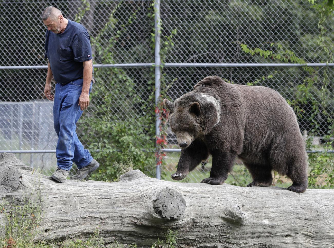bear рис 3