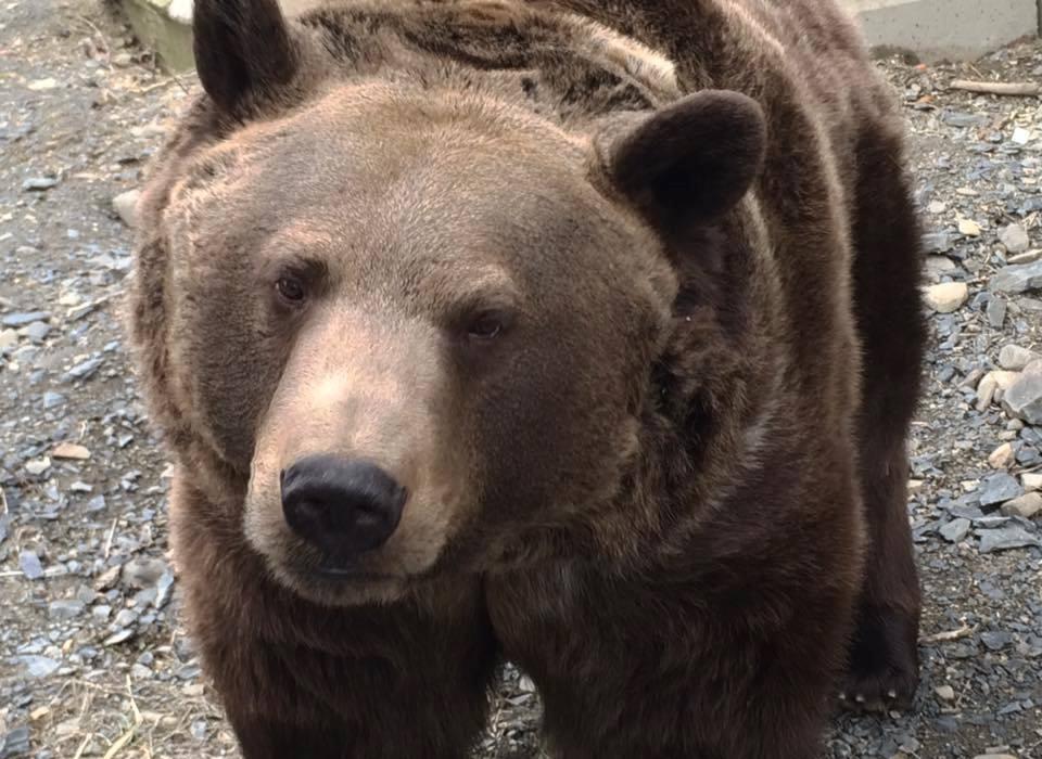 bear рис 2