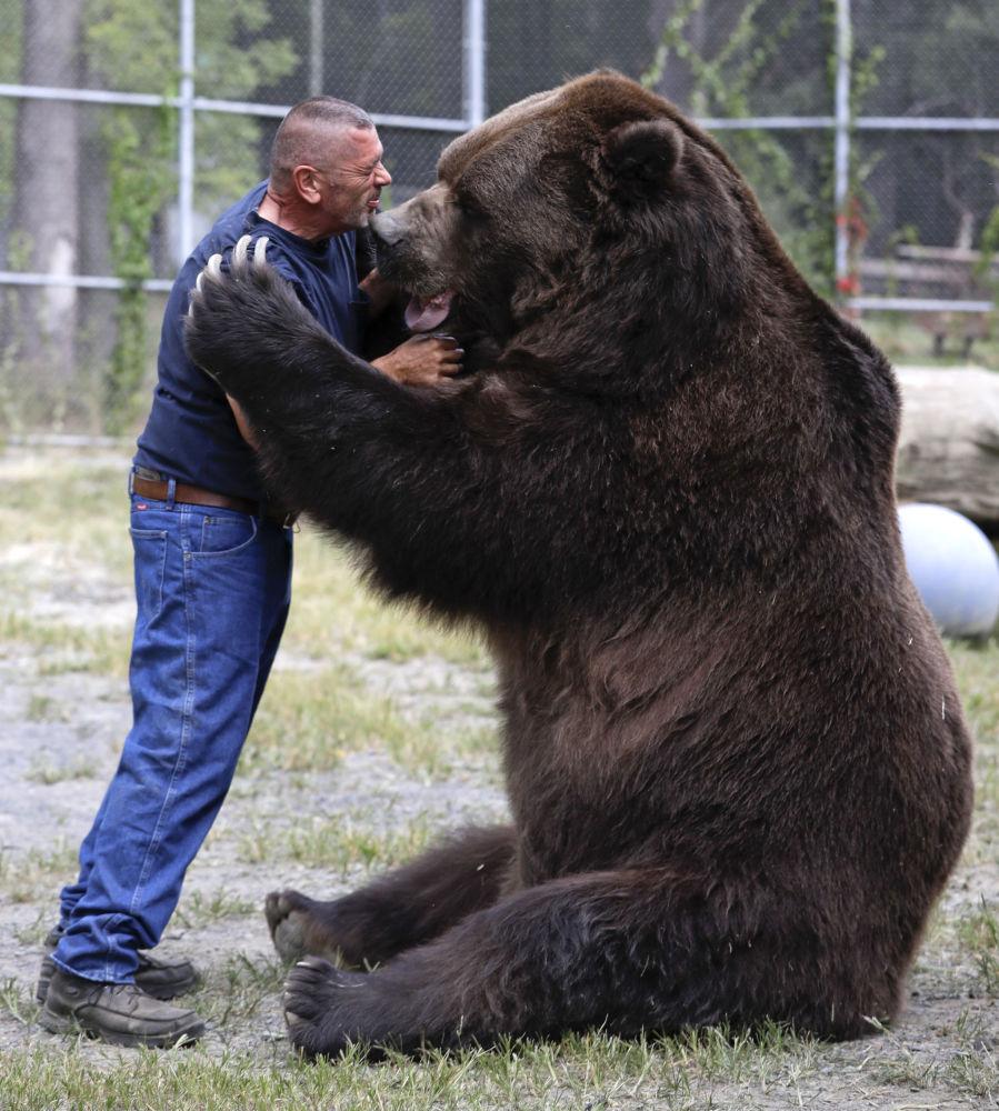bear рис 4