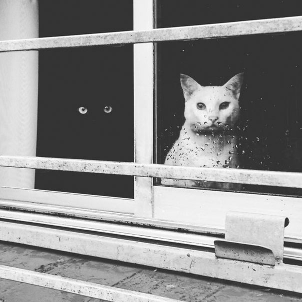 cats рис 2