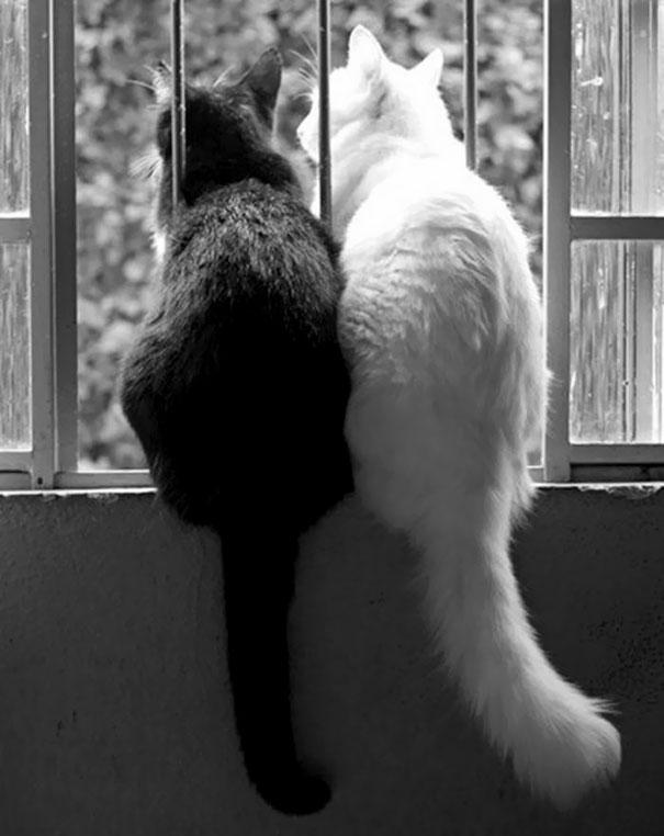 cats рис 6