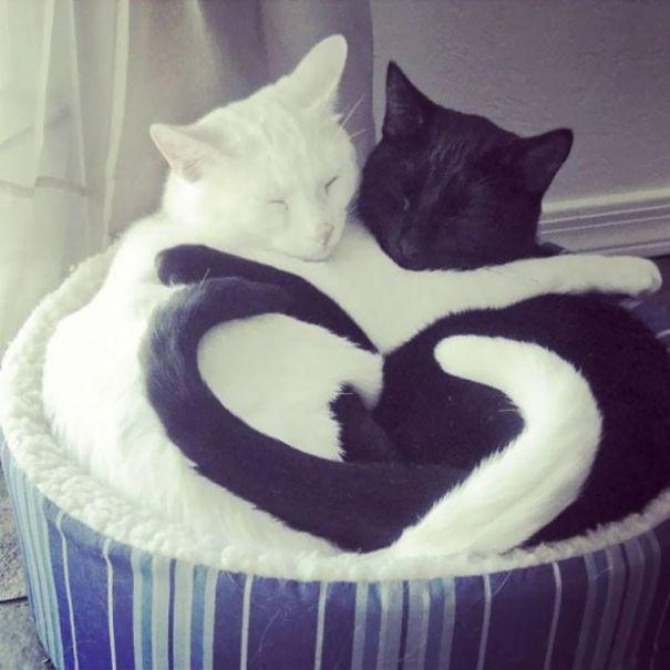 cats рис 4