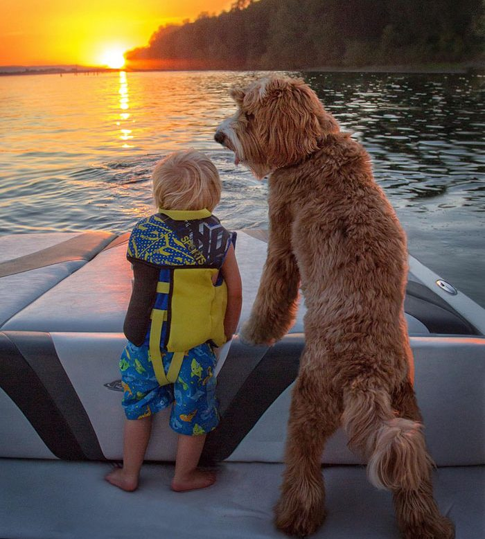 foster-child-labradoodle-dog-book-buddy-reagan-7