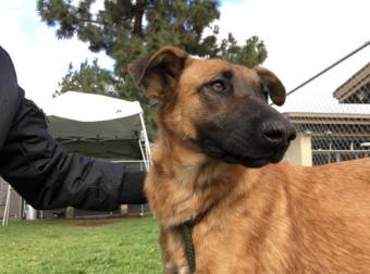 Собака целовала руки хозяев, которые нашли её в приюте! Но они пришли не за ней…
