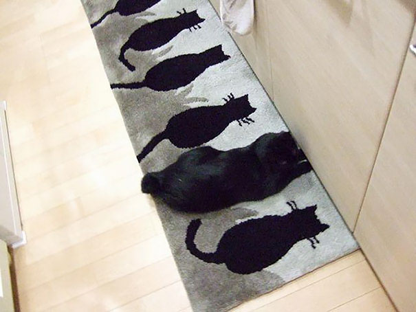 cat рис 5