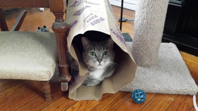 cat and package