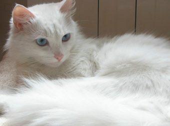 Хатико по-кошачьему: преданный кот ждал хозяина у больницы… 9 дней!