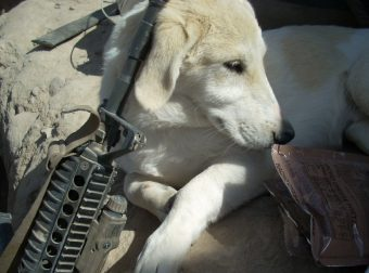 Военный рисковал своей жизнью, но не бросил нового лучшего друга…