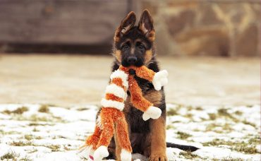 b_0_650_00___images_article-dogs_article-puppy-4