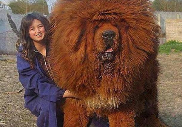 Как выглядит самый большой человек в мире