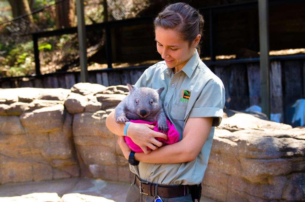 mammals_common_wombat1-1030x682