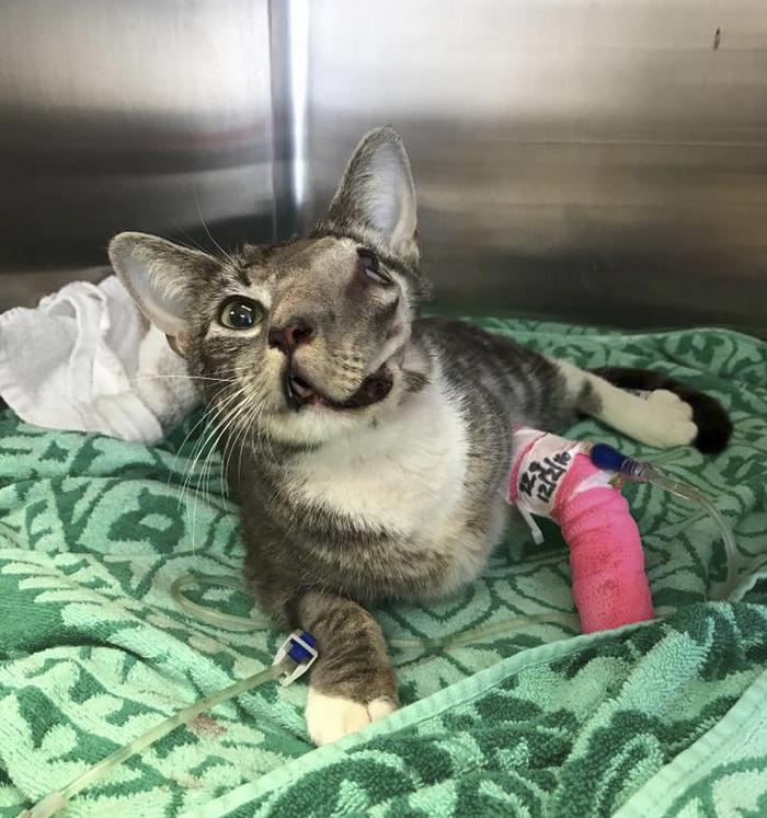 rescue-cat-mouth-tumor-keta-5