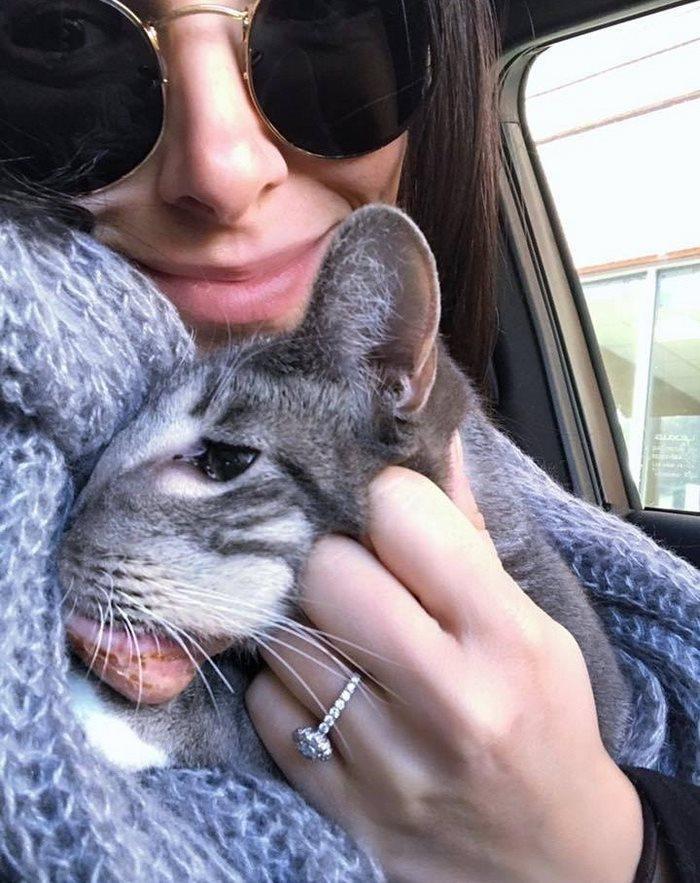 rescue-cat-mouth-tumor-keta-9