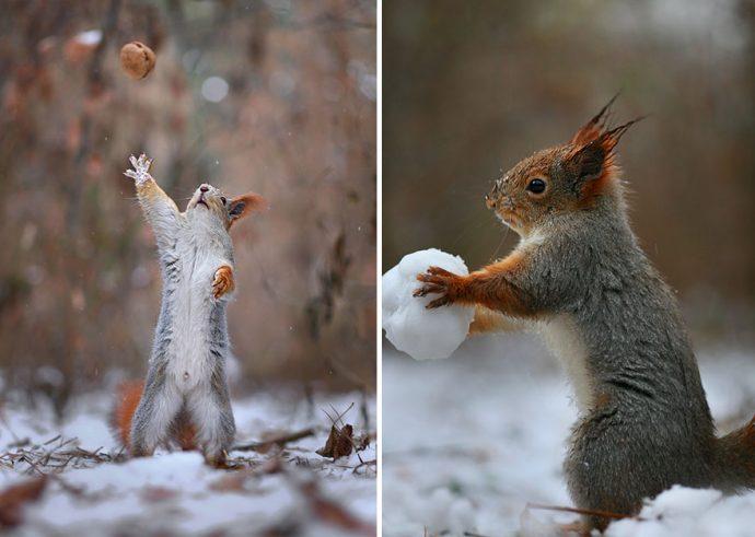 Беличьи зимние игры в фотографиях Вадима Трунова