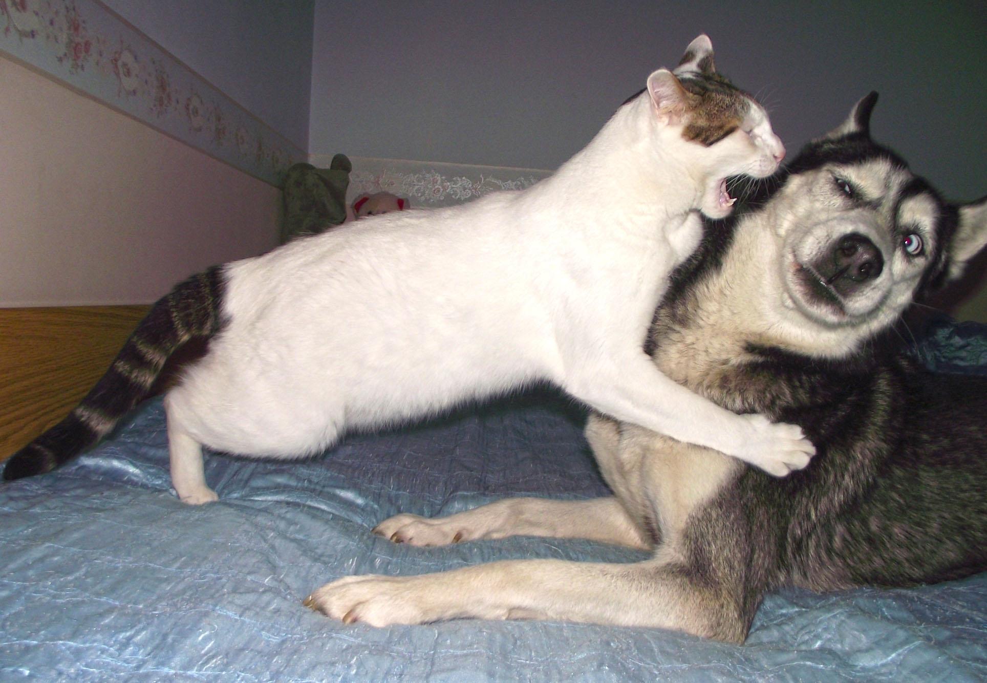 Встречу, смешные фотки про собак и кошек
