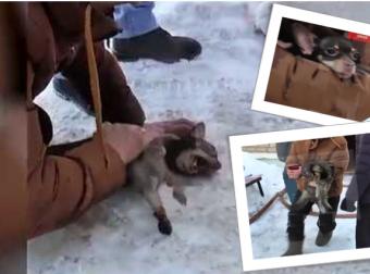 Это сильное видео… Парень бросился в огонь, чтоб спасти кошку и собаку!