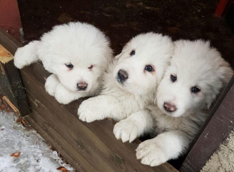 254d3f7-puppies