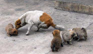 chinese dog