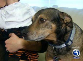 Пёс из приюта спас 9-недельную малышку своих хозяев: вот она — собачья благодарность за добро!