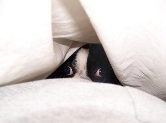 «Найди меня, хозяин, если сможешь…» 20 собак, которые играют в прятки))